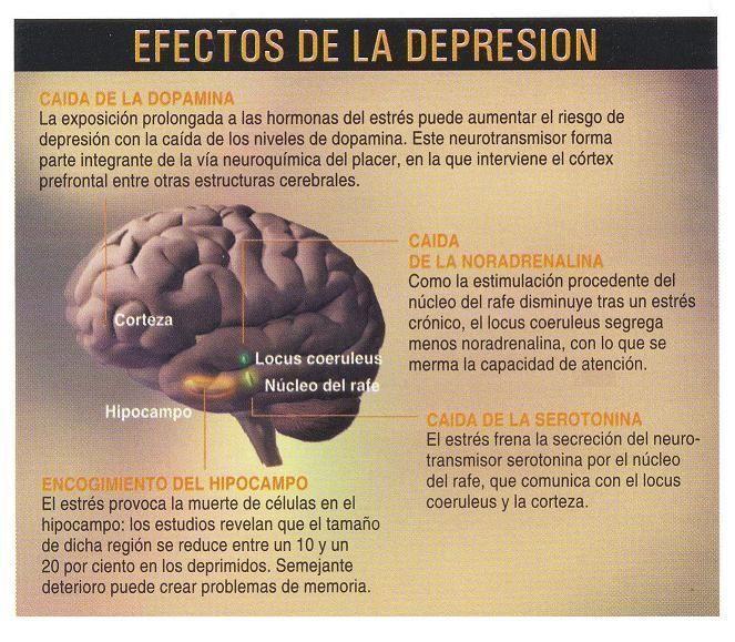 efectos de la depresión en el cerebro